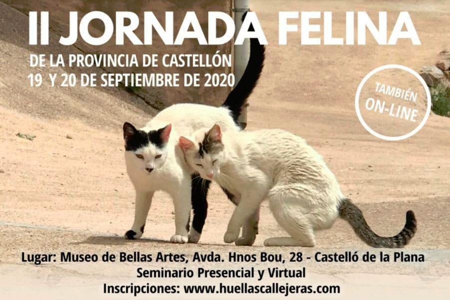 II Jornada Felina en Castellón-IPA