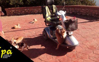 Tres Ayuntamientos condenados en casos de gatos de la calle
