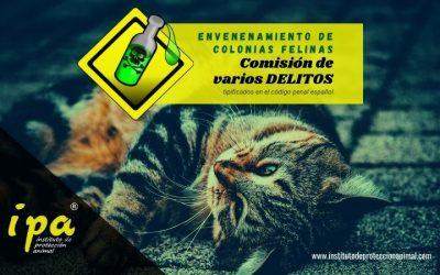 El envenenamiento de colonias felinas y la comisión de varios delitos