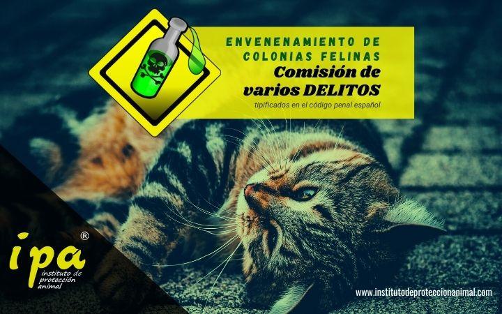 Artículo sobre el Envenenamientos de Colonias Felinas. Comisión de Varios Delitos