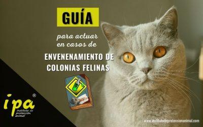 Guía para actuar en casos de envenenamiento de Colonias Felinas