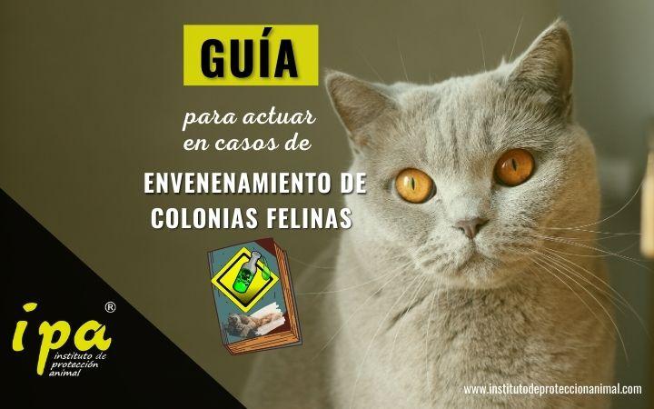 Artículo-Guía para actuar en Envenenamientos de Colonias Felinas