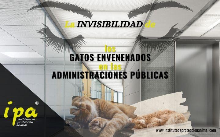 Artículo-La invisibilidad de los gatos envenenados en las Administraciones Públicas