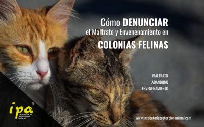 Qué debes saber para Denunciar en casos de Colonias Felinas