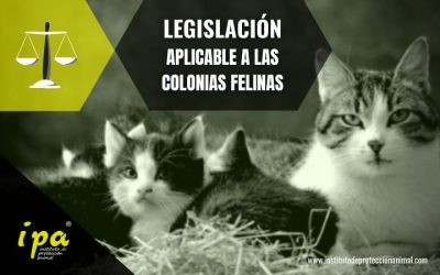 Legislación aplicable a las Colonias Felinas