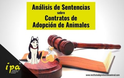 Análisis de Sentencias sobre Contratos de Adopción de Animales