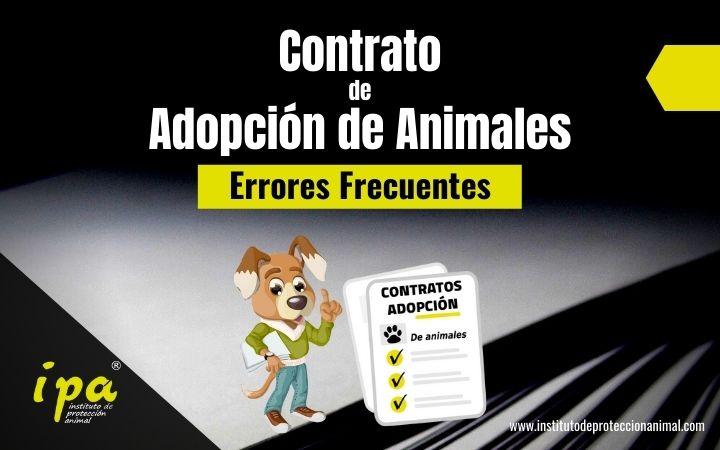 Errores frecuentes en los contratos de adopción de animales