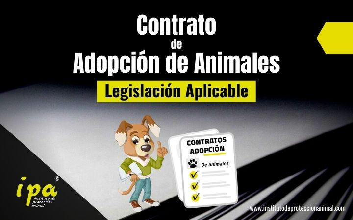 Legislación aplicable al contrato de adopción de animales