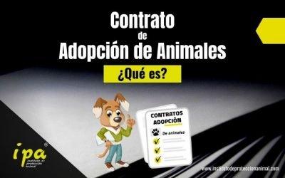 ¿Qué es un Contrato de Adopción de Animales?
