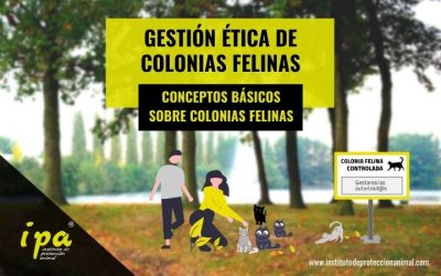 Gestión Ética de Colonias Felinas: Conceptos Básicos
