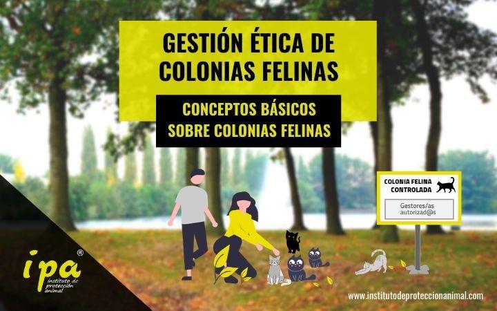 Gestión Ética de Colonias Felinas - Conceptos Básicos