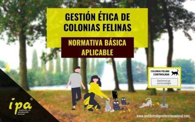 Gestión Ética de Colonias Felinas: Normativa Básica aplicable
