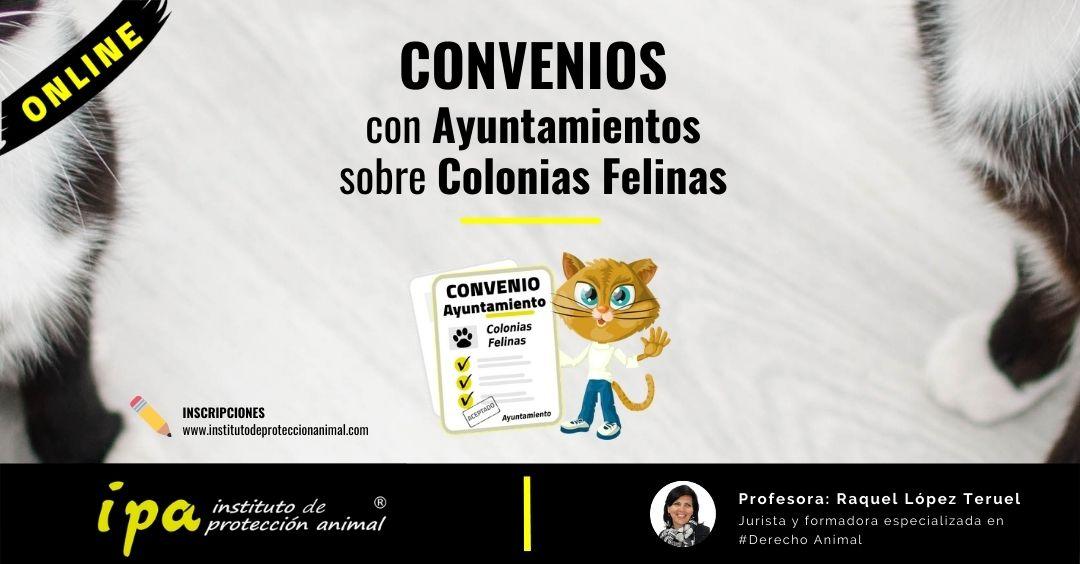 Curso Convenios con Ayuntamientos sobre Colonias Felinas