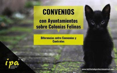 Diferencias entre Convenios y Contratos con Ayuntamientos sobre Colonias Felinas