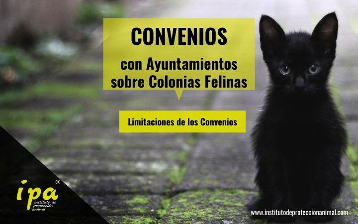 Limitaciones Convenios Colonias Felinas
