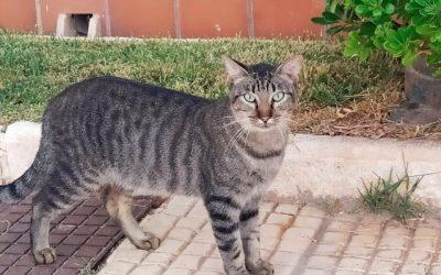 ¿Protegen las leyes a las colonias felinas en España?