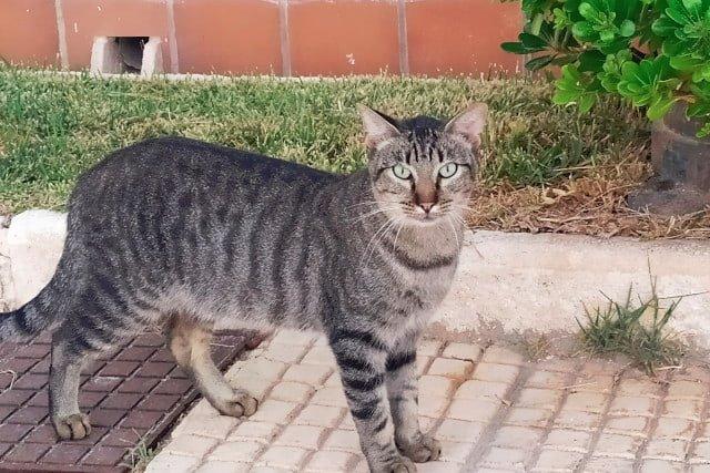 gato-feral-colonia-felina